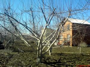 Целиком побеленое дерево