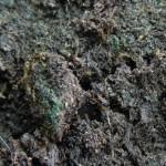 Зеленый налет на почве - симптом закисания