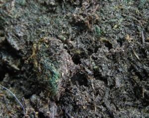 Грунт позеленел
