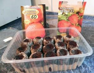 Крупноплодные сорта земляники заслуживают отдельных торфяных таблеток