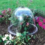 Весенние заморозки: как уберечь огород и сад