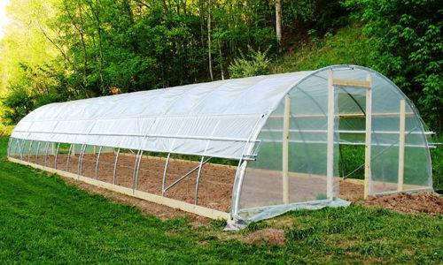 Выращивание помидоров в теплицах для начинающих: советы и секреты