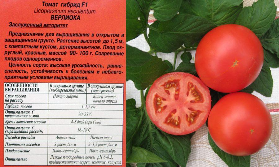 """Особенности выращивание томата сорта """"Верлиока"""""""
