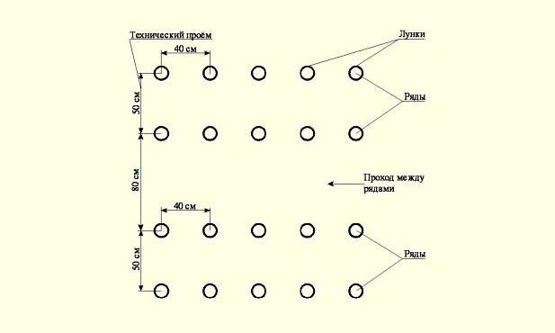Томат сорта Буденовка: описание, посадка, уход