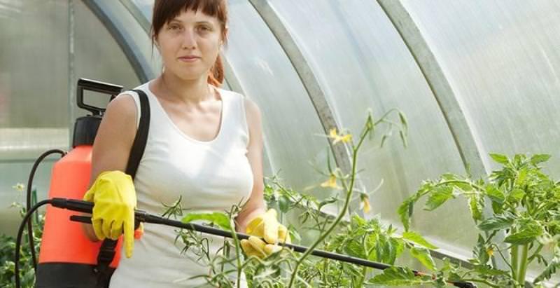 Бордоская жидкость для томатов: приготовление и использование