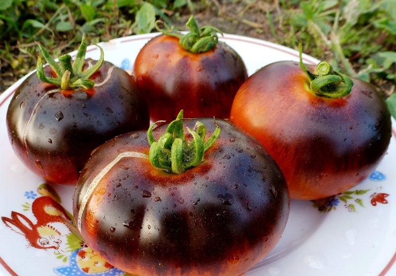 Можно ли мариновать черные помидоры