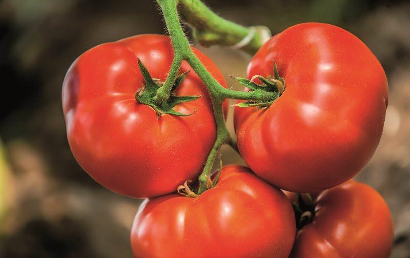 Сорта ранних томатов: Биг Биф F1