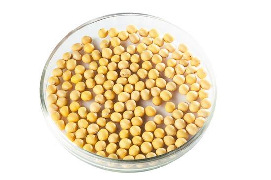 Соя: химический состав и питательная ценность целебных бобов
