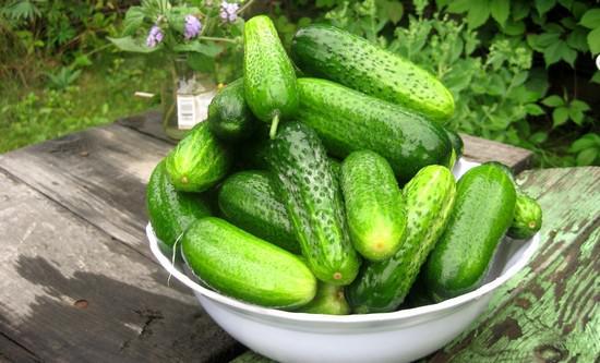 Как правильно выращивать огурцы в открытом грунте и теплице