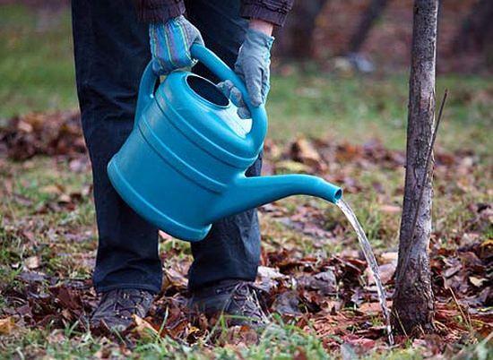 Выращивание вишни в саду: технология посадки и особенности ухода