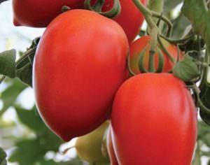 Характеристика и описание сорта томатов Кенигсберг