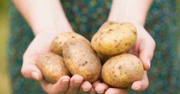 Когда сажать картофель в 2018 году: полезные советы и точные даты
