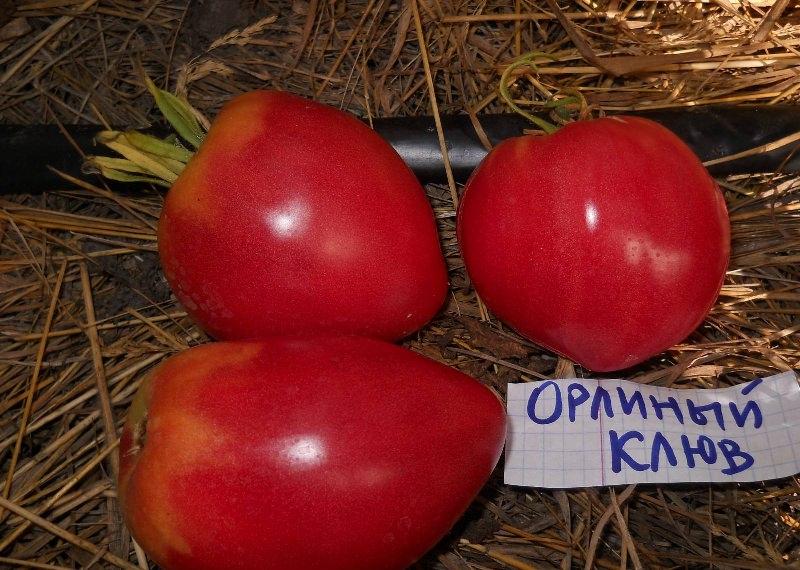 Характеристики и описание томата Орлиный клюв: отзывы и фото
