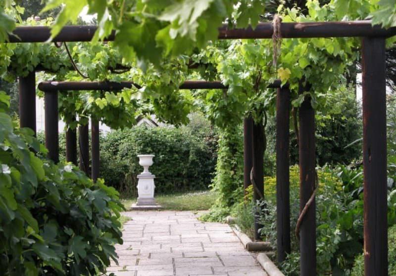Как сделать своими руками перголу для винограда