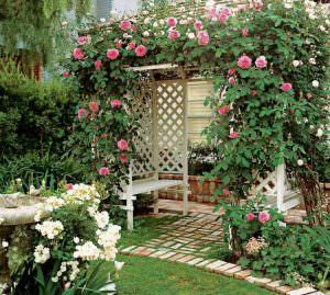 Пергола для роз: описание конструкции и изготовление своими руками