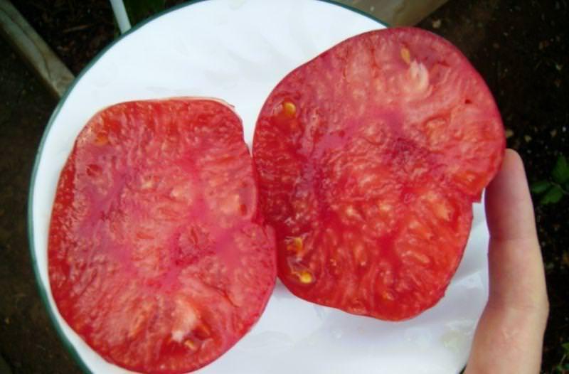 Характеристики и описание томата Розовый мед: отзывы и фото