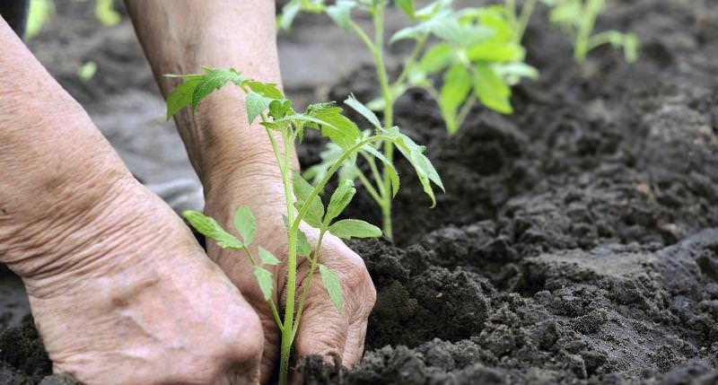 посадила рассаду овощей 16февраля 2016 когда рекировка