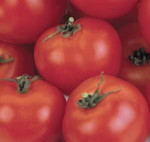 Характеристика томата Андромеда: отзывы потребителей