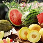 Как вырастить арбузы и дыни в теплице