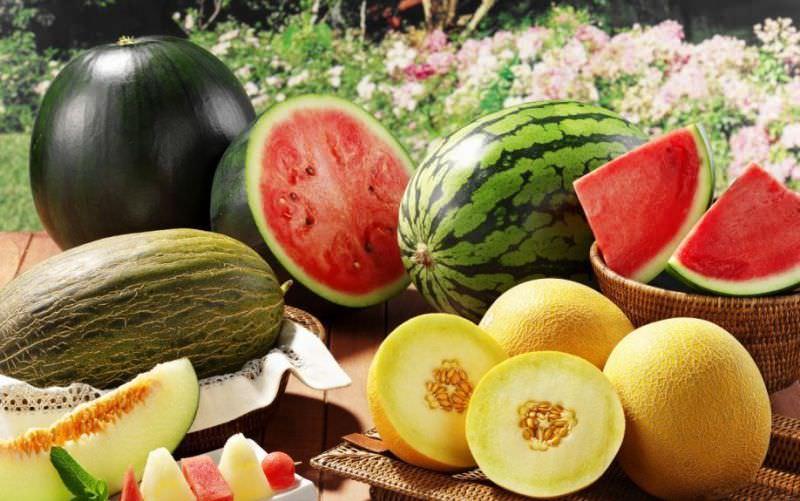 Правила выращивания арбузов и дынь в теплице