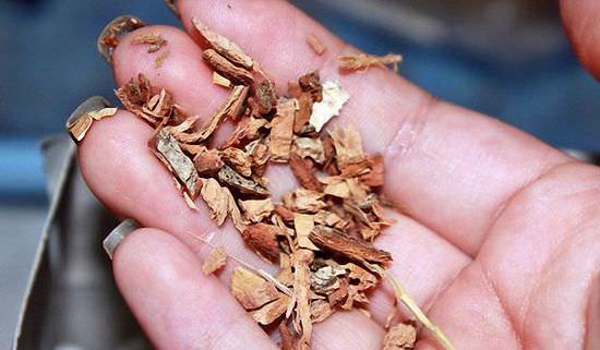 Ива белая: кора, экстракт, листья ветлы, лечебные, полезные свойства дерева, противопоказания, вред, применение, фото