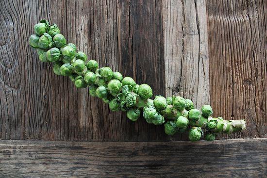 Брюссельская капуста: особенности выращивания и ухода