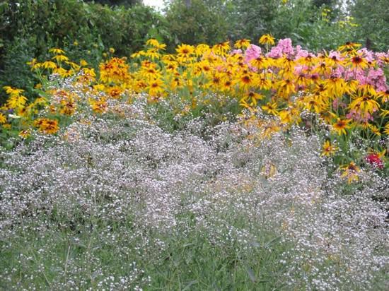 Гипсофила: применение в ландшафтном дизайне, описание популярных видов растения