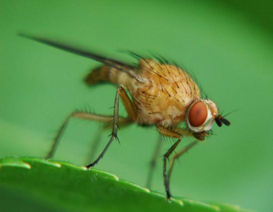Виды заболеваний и вредителей малины, способы борьбы с ними