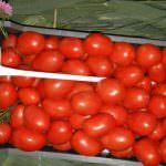 Томат Рио Гранде: описание и характеристика сорта, урожайность с фото