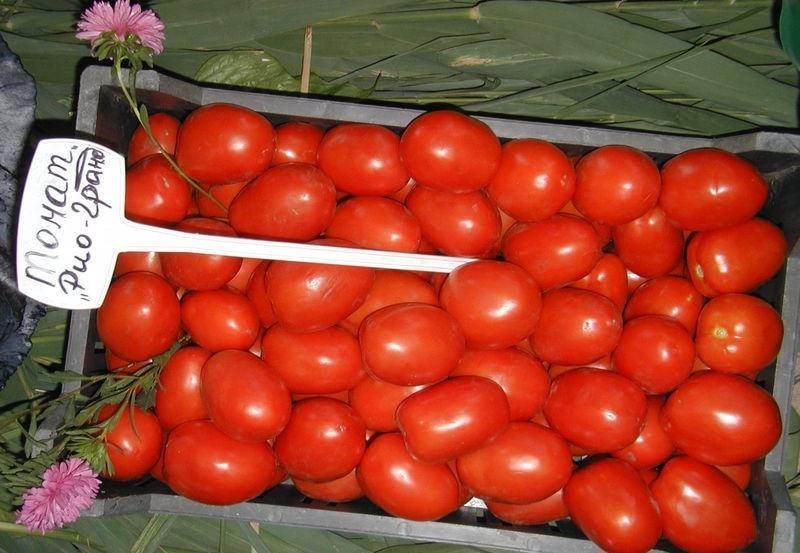 капустой очень томат рио гранде отзывы и фото предлагаем