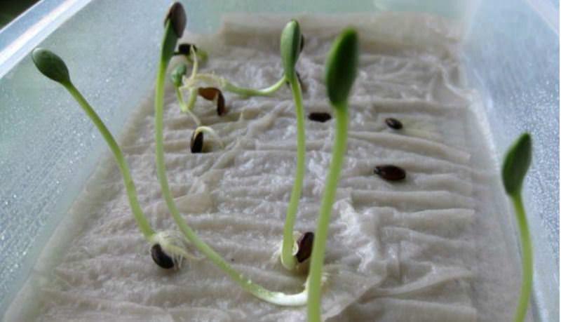 Определение благоприятного времени для посадки арбузов