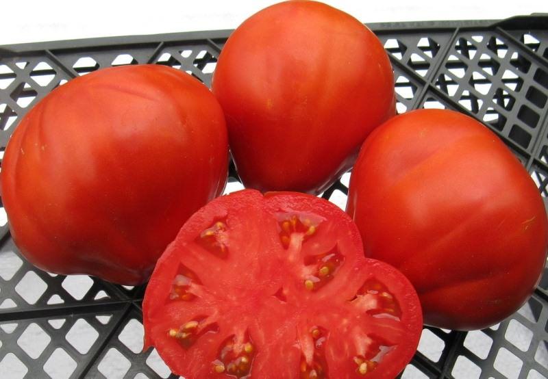 Характеристика сорта томатов Сто пудов