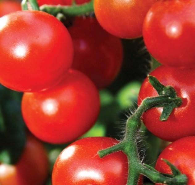 Особенности и разновидности томата вишня красная