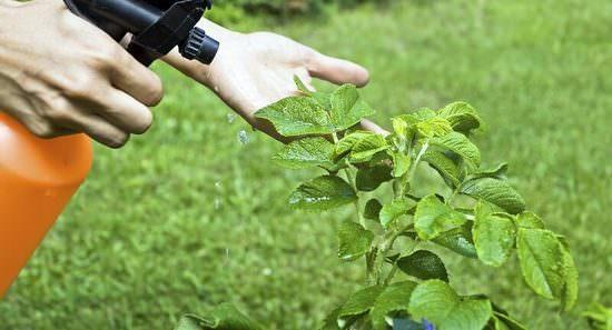 Особенности применения препарата Максим для обработки растений