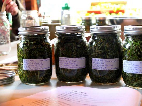 Багульник болотный: целебные свойства и способы применения в медицине