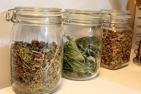 Частуха обыкновенная: целебные свойства растения и применение в народной медицине