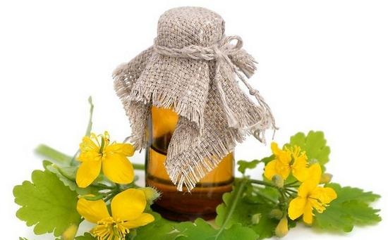 Чистотел: лечебные свойства ядовитого растения