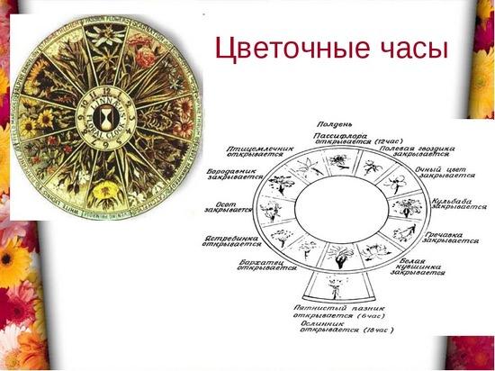 Который час? Спросите у цветов! Создаем цветочные часы своими руками
