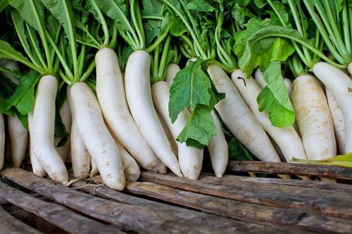 Дайкон: характеристика сортов и особенности выращивания
