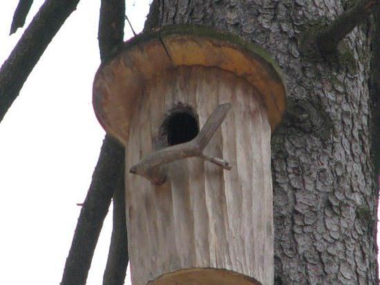 Белка песенки поет да орешки все грызет: делаем домик для белки своими руками