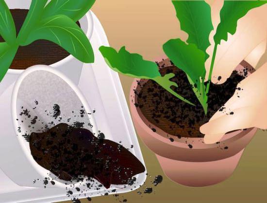 Жизнерадостная гербера: практическое руководство по уходу и размножению в домашних условиях