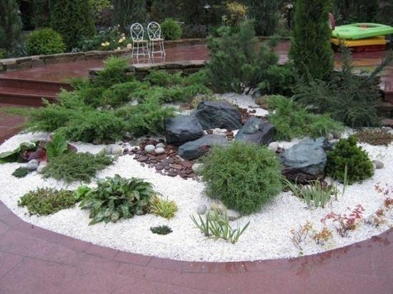 Выращиваем хвойные растения у себя на участке