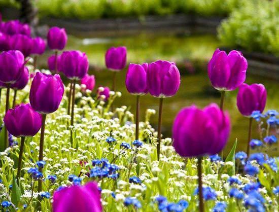Цветут и пахнут: подбираем композицию цветочных ароматов дома и на даче