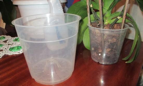 Как правильно пересадить орхидею: оптимальные сроки и технология