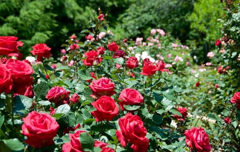 Цветы и растения для солнечных мест сада: рекомендации по выбору