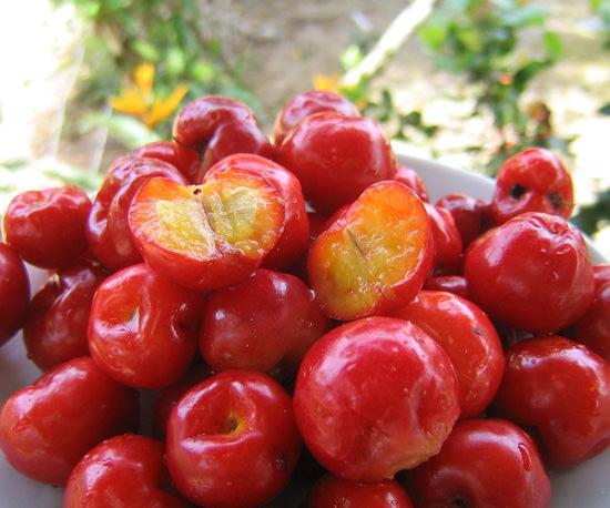 Барбадосская вишня: использование ацеролы в кулинарии и медицине