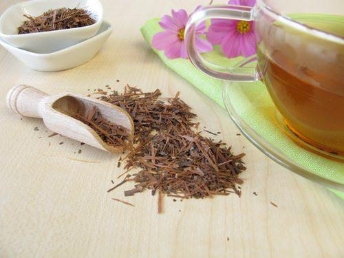 Кора муравьиного дерева: лечебные свойства и особенности применения в медицине
