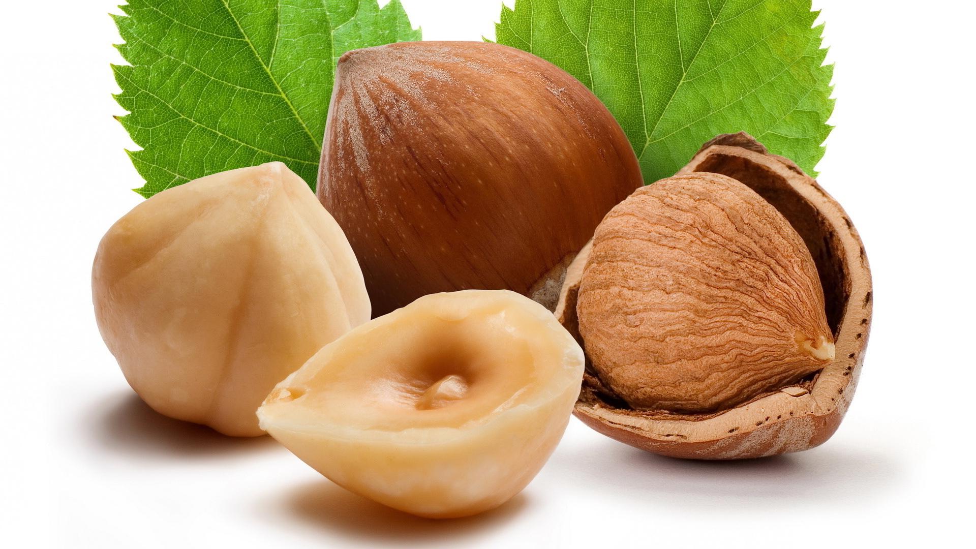 Лесной орешник: ботаническое описание, лечебные свойства и применение лещины в народной медицине