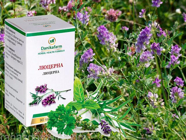 Люцерна посевная: знакомство с растением и его полезными свойствами