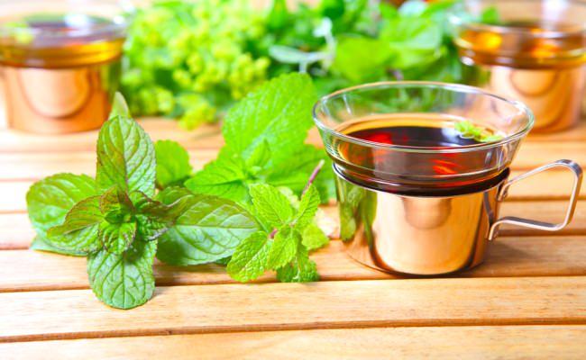 Мелисса лекарственная: лечебные свойства и побочные эффекты растения